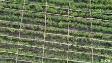 Eco Africa - Die Drohnen-Technologie bringt die Landwirtschaft in die Zukunft