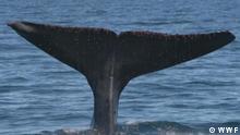 Was ist das größte Tier der Erde? Projekt Zukunft