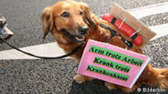 Ein Hund mit einem Protestplakat: Arm trotz Arbeit, krank trotz Krankenkasse