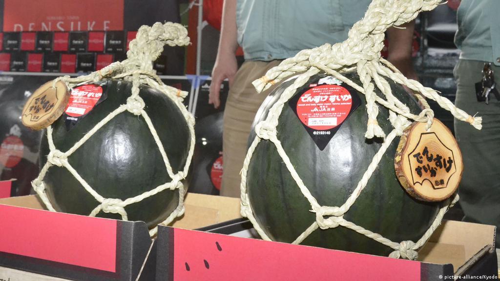 Premium Densuke watermelon fetches less than €1,820 at Japan auction   News   DW   15.06.2020