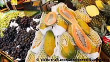 Bildergalerie Landwirtschaft Papaya