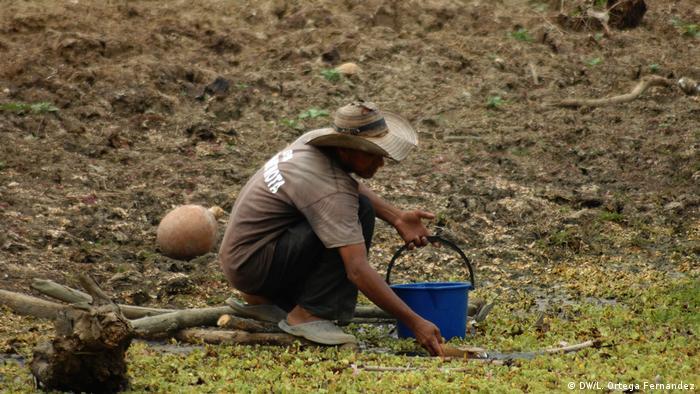 """""""Las temperaturas están subiendo tanto que las repercusiones sobre los cultivos de maíz, el arroz y el trigo van a ser muy graves en América Latina""""."""