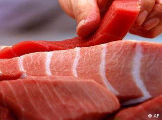 Flash-Galerie Artenschutz Roter Tunfisch