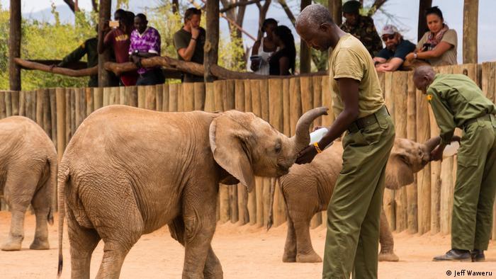 DW Eco Africa - Reteti Elephant Sanctuary in Kenya
