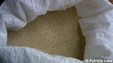 quinoa Quinoa verkaufsbereit. Das südamerikanische Quinoa erfreut sich wachsender Beliebtheit. Zu recht, denn sein Nährstoffprofil weist es als hochwertiges Lebensmittel aus. Eigentlich sollte die eiweißreiche Pflanze den Hunger der Armen stillen und weniger die ohnehin schon beträchtliche Nahrungsmittelauswahl der Europäer bereichern. Doch fair gehandelte Quinoa-Importe führen nicht nur zu Abwechslung auf unserer Speisekarte, sie stärken auch die Stellung der Kleinbauern in den Anbauländern.
