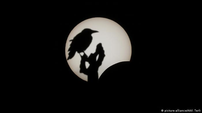 Bird seen as shadow in front of the sun (picture-alliance/AA/I. Terli)