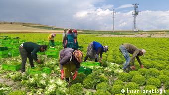 Υπό πίεση ο τομέας της αγροτικής παραγωγής στην Τουρκία