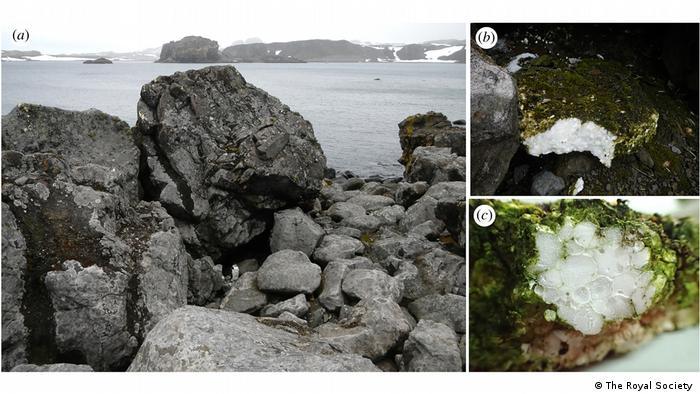 Fotografias de rochas em orla da Antártida e imagens de placa de isopor coberta de musgo