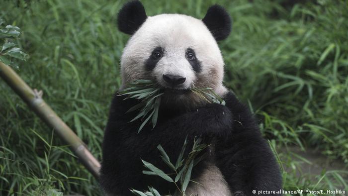 BdTD Japan Wiedereröffnung Zoo in Tokio (picture-alliance/AP Photo/E. Hoshiko)