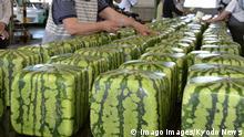 BdTD Japan Verkauf von eckigen Melonen in Zentsuji