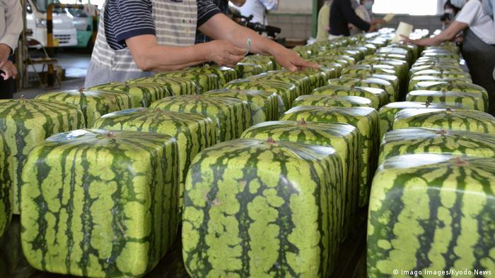 البطيخ المربع في اليابان (24/6/2020)