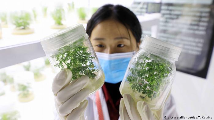 Artemisia Obat Herbal Berpotensi