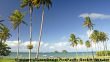 BG Fun facts | Palmen auf Fiji (picture-alliance/Design Pics/Pacific Stock/H. Smeaton)