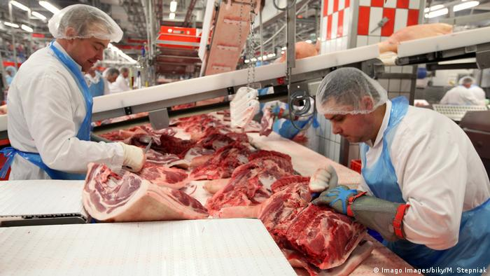 Migrant slaughterhouse workers at a meat factory are cutting meat