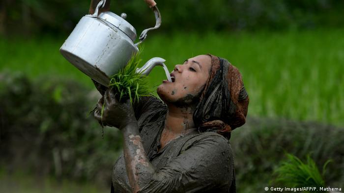 Počela je godišnja sezona sadnje pirinča. Težak posao ovoj ženi olakšava vino od priniča! I ne samo da olakšava posao, već je i dozvoljeno da pijete na radnom mjestu! Svetkovine ovdje u Katmaduu, takođe treba da doprinesu boljem rodu pirinča.