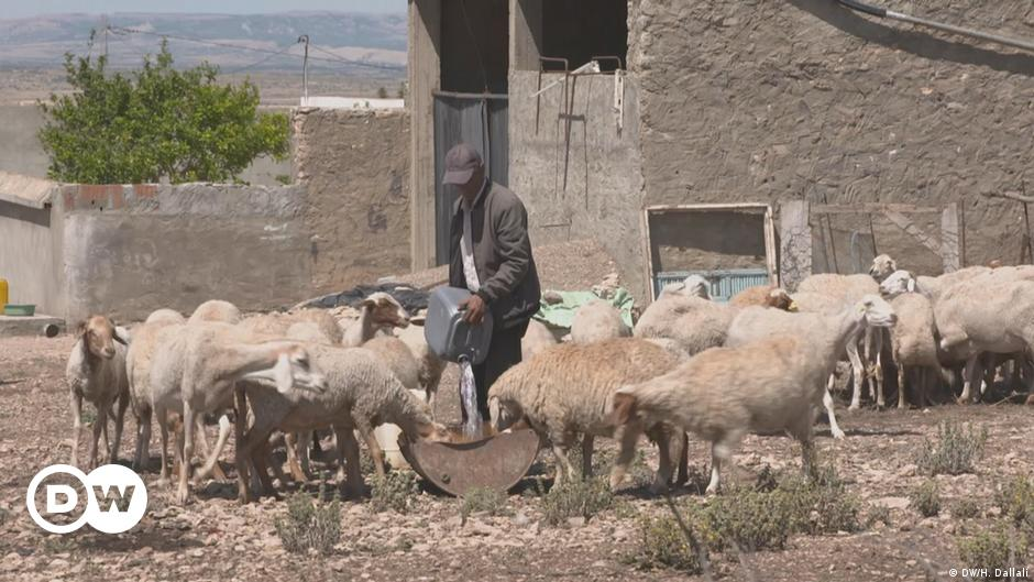Bringing water to Tunisia's struggling farmers
