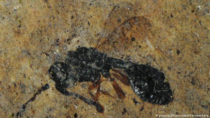 BdT - Fossilien in Grube Messel