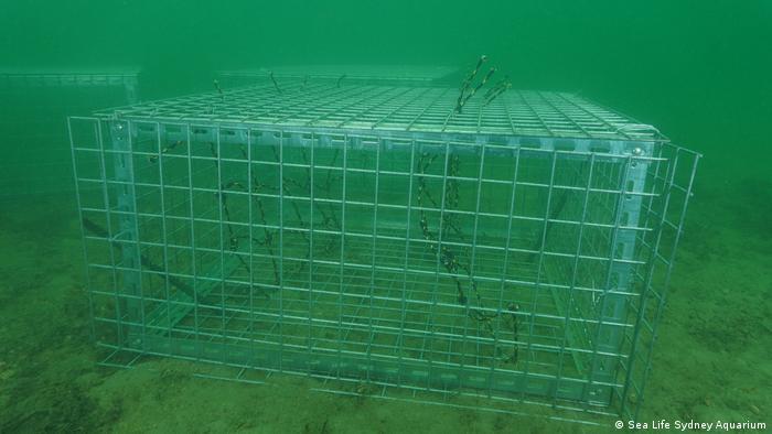 Seahorse hotel structure underwater near Sydney