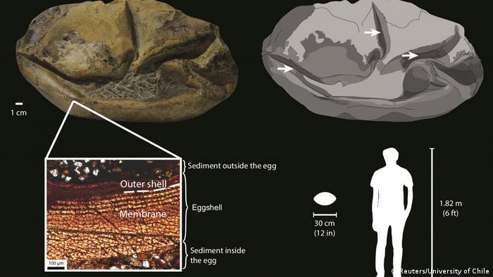 مخطط توضيحي وضعته جامعة تشيلي لتفسير تطور هذا الشيء أو البيضة الحجرية.
