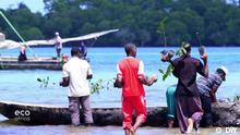 The rebirth of a Zanzibarian island Bilder aus der DW-Sendung Eco Africa Eco Africa, environment, Zanzibar, Tanzania, Pemba, deforestation, trees, islands