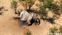 Rätselhaftes Elefantensterben im Okavango Delta, Botswana, Bostwana