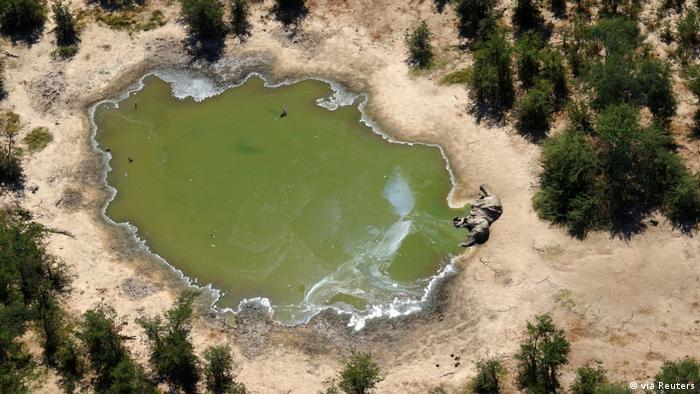 Centenas de elefantes mortos forma encontrados no delta do Okavango, em Botsuana