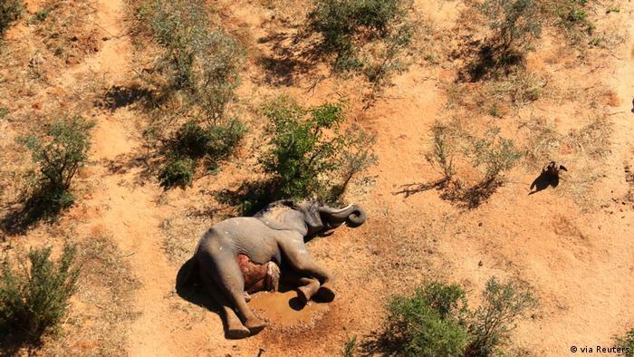 Rätselhaftes Elefantensterben im Okavango Delta, Botswana, Bostwana (via Reuters)