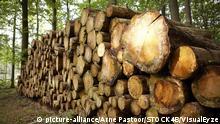 Symbolbild Gestapelte Holzstämme im Wald