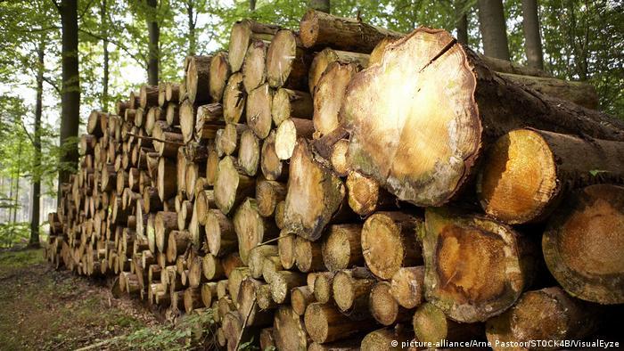 Symbolbild Gestapelte Holzstämme im Wald (picture-alliance/Arne Pastoor/STOCK4B/VisualEyze)