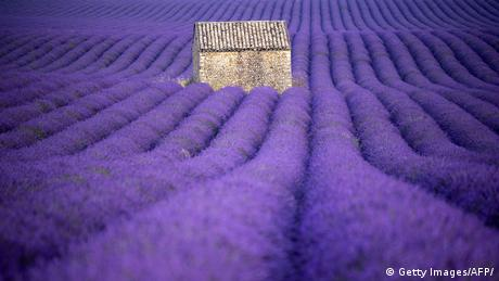 BdTD | Frankreich | Lavendelfeld (Getty Images/AFP/)