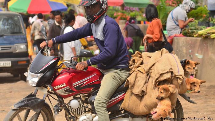 Indien | Hundfleisch: Lebendige Hunde werden auf Motorrad transportiert (picture-alliance/NurPhoto/C. Mao)