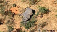 Botswana Elefantensterben