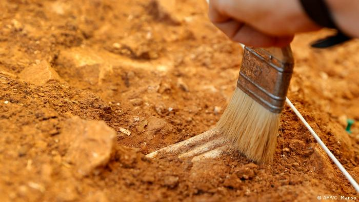 Symbolbild Paläontologie Archäologie