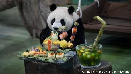 BdTD Taiwan Panda Geburtstag (Imago Images/Xinhua/Jin Liwang)