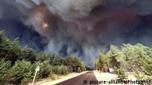 Ukraine Waldbränden in Luhansk-Oblast