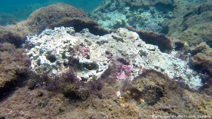 non-vibrant coral