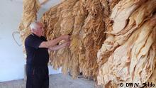 Tabakanbau in Bosnien und Herzegowina