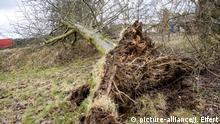 Ein umgestürzter Baum (picture-alliance/J. Eifert)