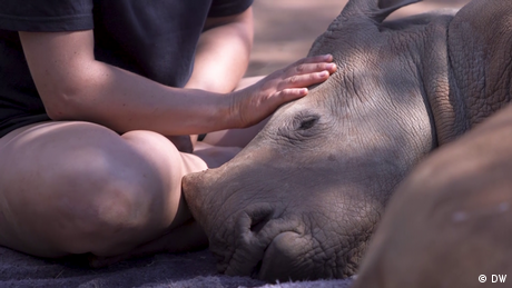 Eco Africa - Rhino 911: South Africa takes poaching by the horn