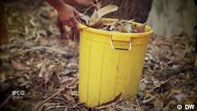 Sendung Eco India braune Blätter