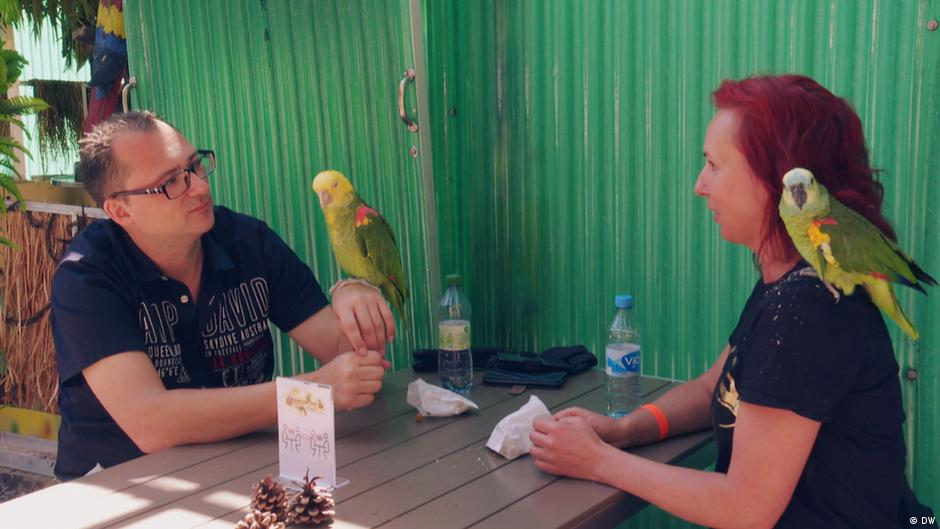 An unusual attraction: Germany's parrot cafe | DW | 14.07.2020