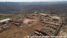 Brasilien Abholzung des Amazonasgebiets