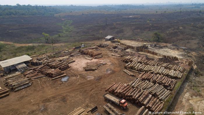 Vários troncos de árvores empilhados em uma área desmatada