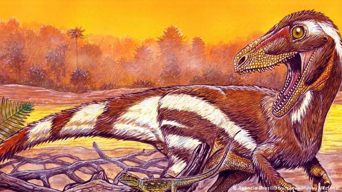 Scientists believe the newly-discovered Aratasaurus museunacionali roamed the Earth 115 million years ago