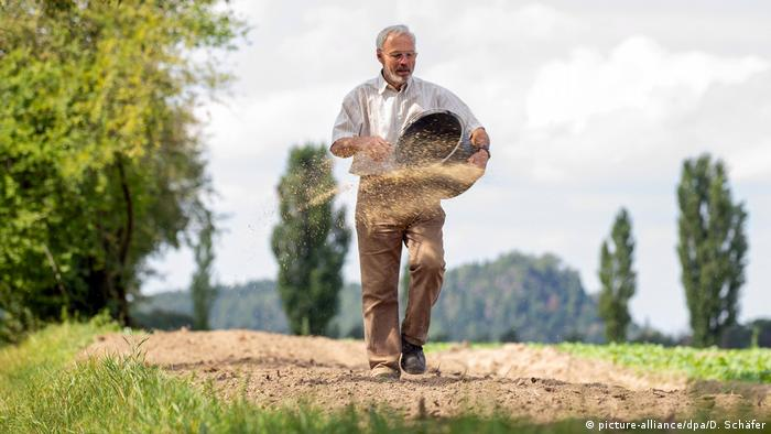 A man holds a basket and sows seeds by hand