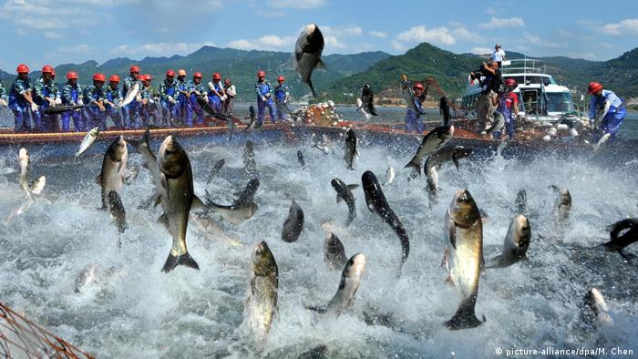 Fish jump out of the water in Qiandao Lake, China (picture-alliance/dpa/M. Chen)