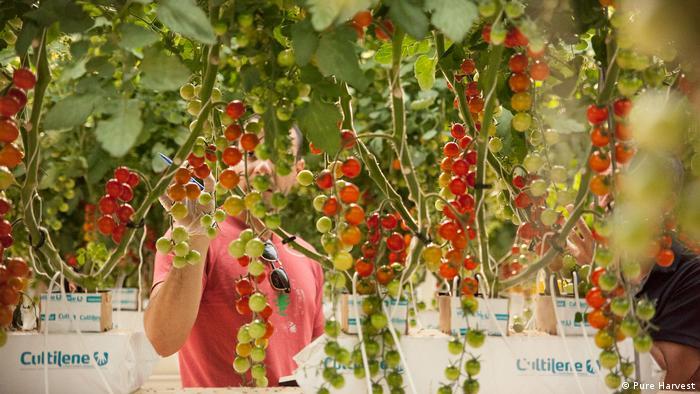 DW Global Ideas - Pure Harvest