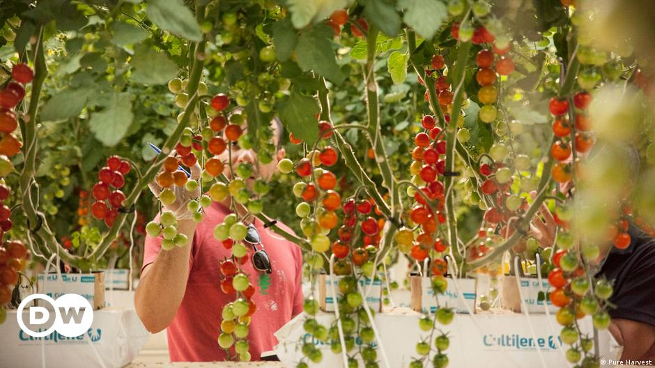 Farming in the desert: Are vertical farms the solution to saving water?