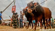 2020 People getting ready for Eid-ul Azha in Bangladesh.