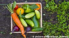 Gesunde Ernährung G-20 Führung entscheidend Ernährung Weltbevölkerung Gesundheit